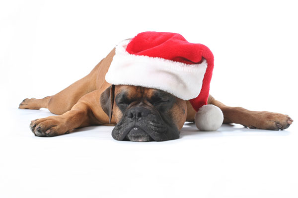 Dog worn out from Christmas | Sheknows.ca