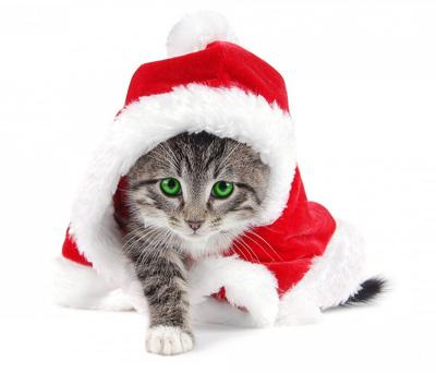 Santa claws 16 adorable kitties dressed up like santa