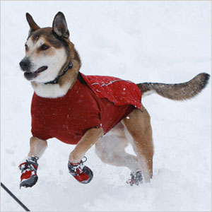 12 Adorable Dog Outfits For Winter