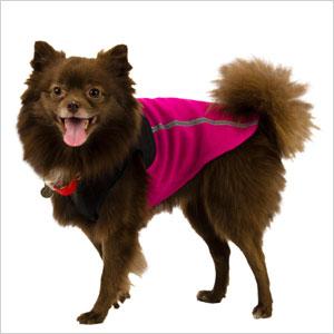 Cute gear to keep Fido warm