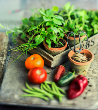 gardening fresh herbs and vegetables