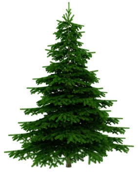 Do you have Christmas Tree Syndrome?