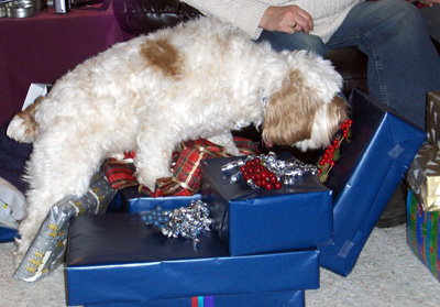 Dog standing on Chritmas gifts