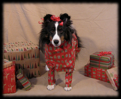 Dog wrapped in wrapping paper