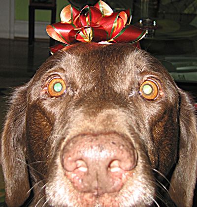 Dog with bow on head