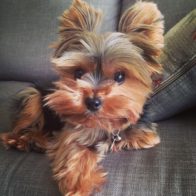 20 Small dog breeds that are the cutest creatures on the planet