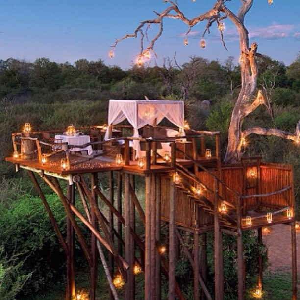 10 Creative Tree House Ideas Taylor Homes