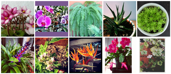 Top 10 houseplants for children