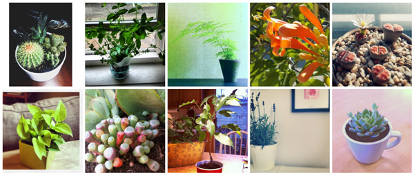 Top 10 houseplants for smaller spaces