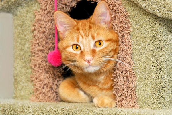 Orange cat in playhouse