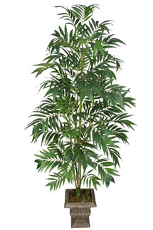 Houseplants: Bamboo Palm