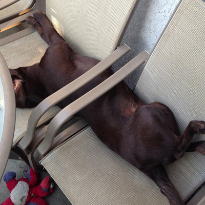 Dog stuck in chair