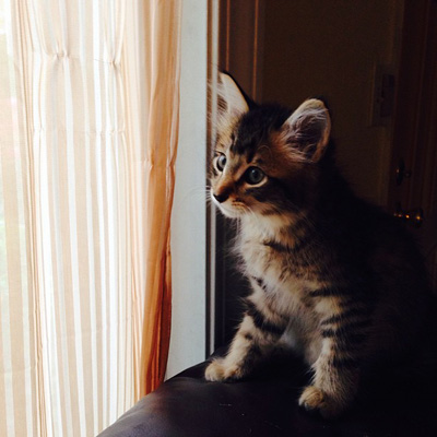 Cutie kitties