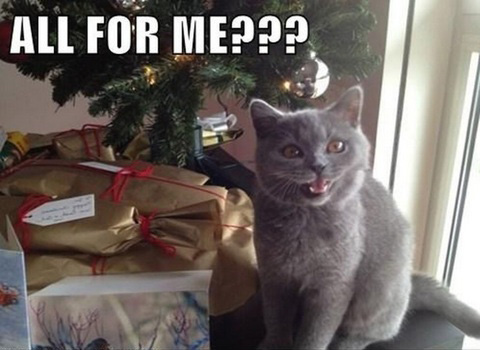 LOL Cats: The greedy are never satisfied