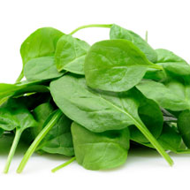 isolated spinach