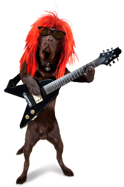 Rock n' roll dog