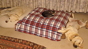 Cat bed hog | Sheknows.com