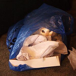 Cat in plastic bag | Sheknows.com