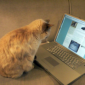 Cat with laptop | Sheknows.com