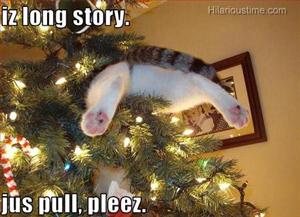 Cat is stuck | Sheknows.com