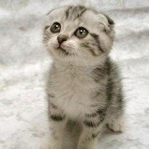 Innocent kitten | Sheknows.com