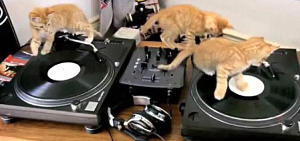 Cat scratch disco | Sheknows.com