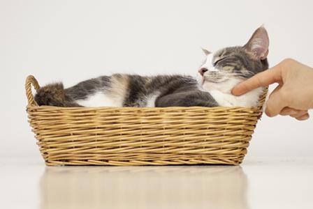 Cat in a basket | Sheknows.com