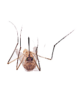 Dead mosquito | Sheknows.ca