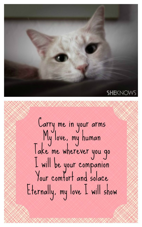 I love you, human