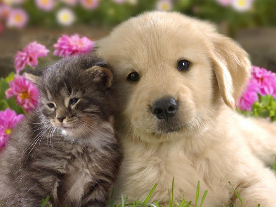 Tabby Kitten and Golden Retriever Puppy Notecards