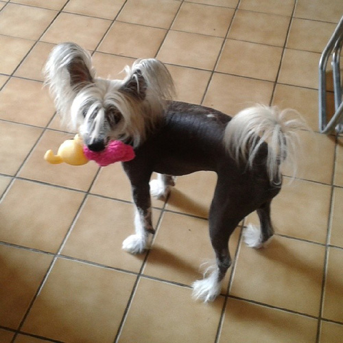 Dogs that will make you smile
