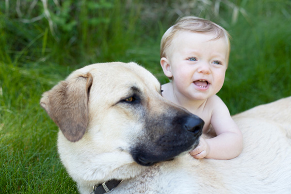 What you can learn from raising a dog