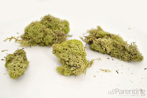 allParenting moss wreath step 1