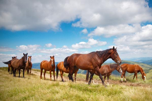 Horse pregnancy hormone