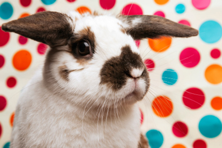 Bunny on polka dots | Sheknows.com