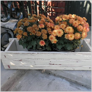 Cute containers for your urban garden
