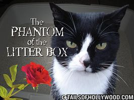 The Phantom of the Litter Box
