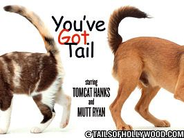You've Got Tail