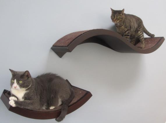 Tamar Arslanian I Have a Cat
