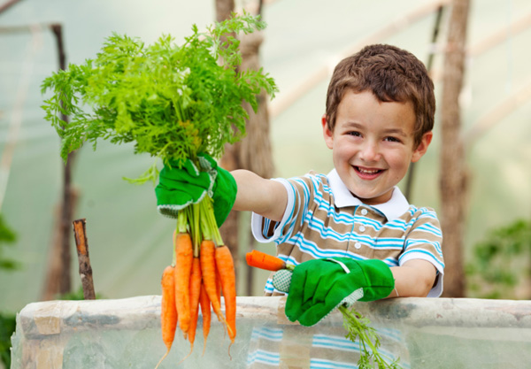 Child in garden with carrots