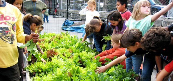 School gardening in New York City