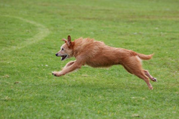 Could diacerein help your arthritis-stricken dog?