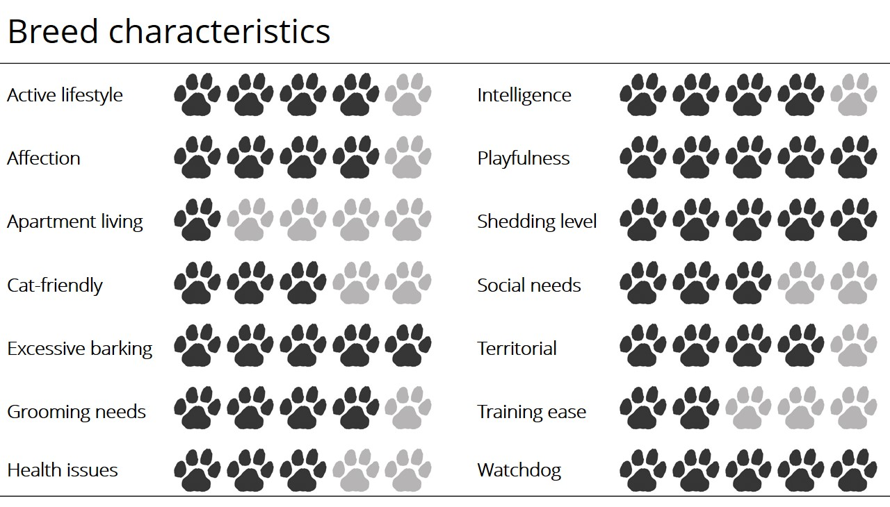 Norwegian Elkhound breed characteristics