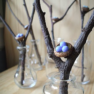 acorn top birds nests