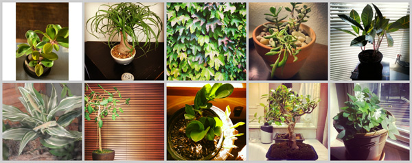 Top 10 the best houseplants for every homeowner for Best no maintenance plants
