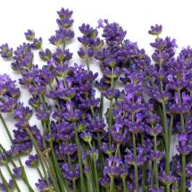 Edible flowers- Lavender