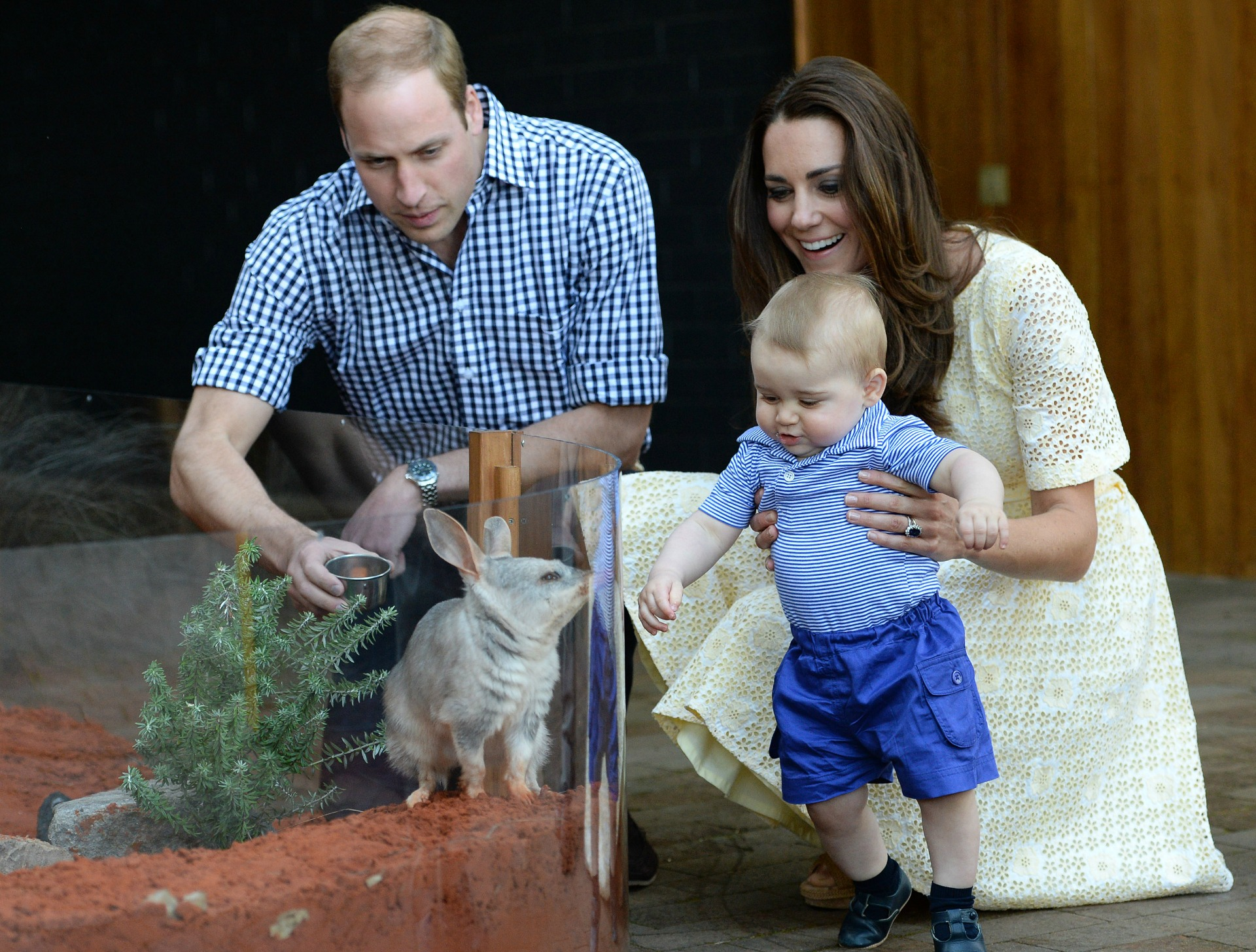 Will and Kate get animalistic