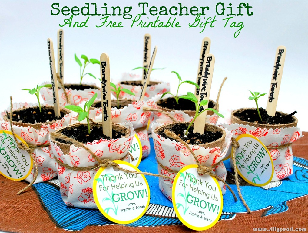 Eco-friendly teacher gift | Sheknows.com