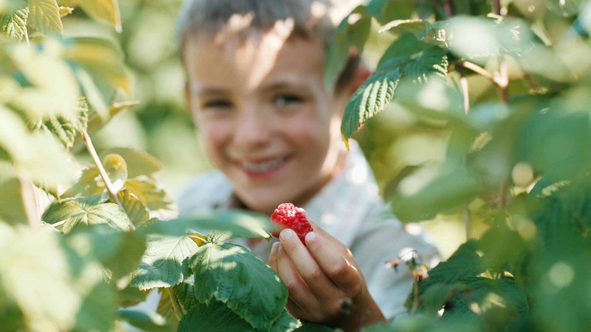 Boy picking berries | Sheknows.com
