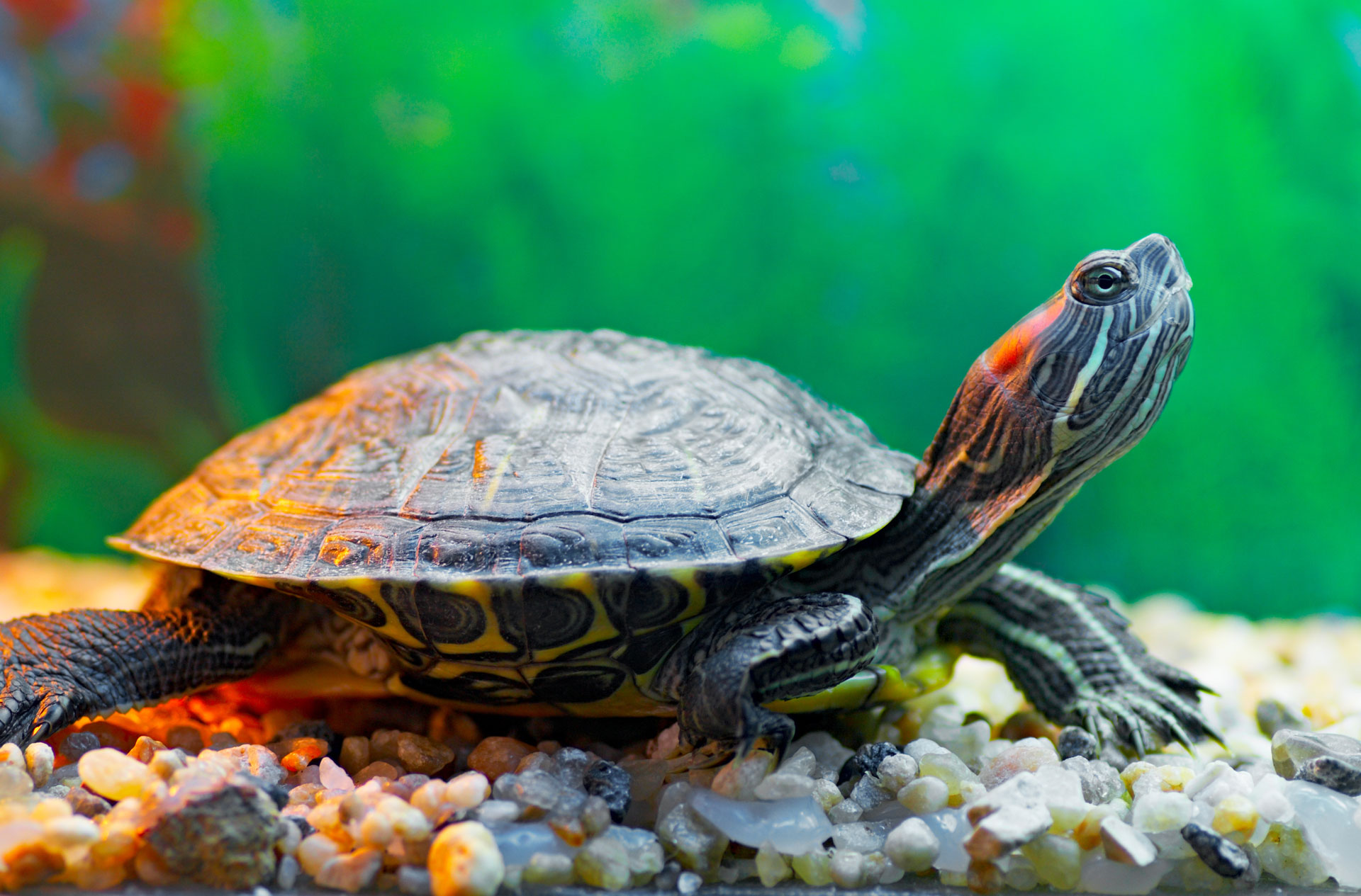 6 Aquatic pets that ar...